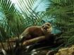 Слика на Видра (Living Nature) 40cm