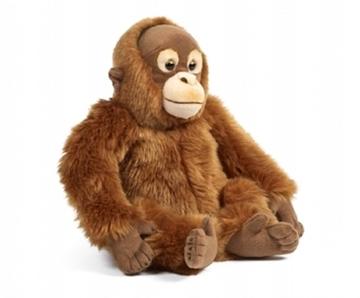 Слика на Орангутан