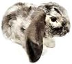 Слика на Зајак со спуштени уши - Living Nature