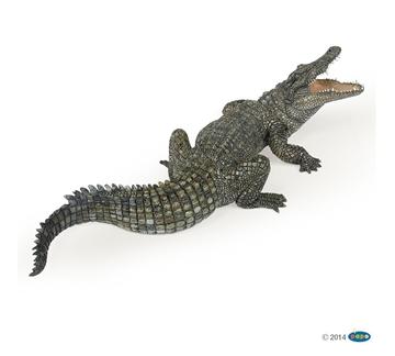 Слика на Нилски крокодил