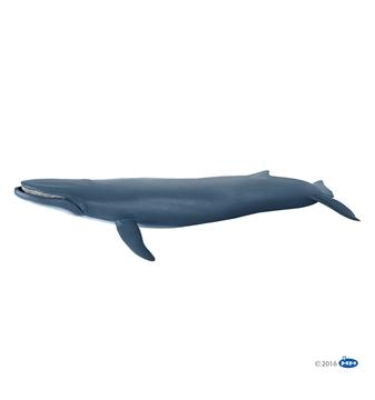 Слика на Син кит