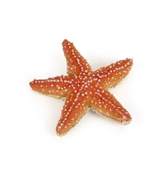 Слика на Морска ѕвезда